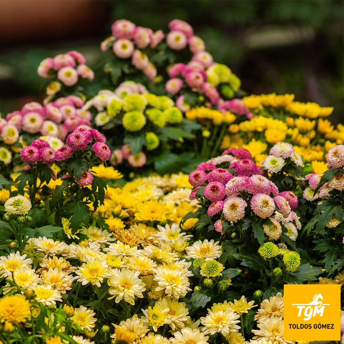 Plantas decorar terraza jardín todo año